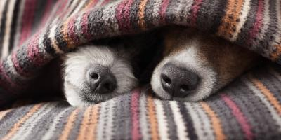 3 Veterinarian-Recommended Tips for Bringing Another Dog Into Your Home, Flatwoods-Russell, Kentucky