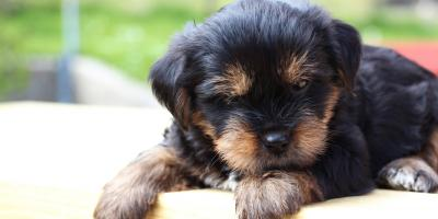 The Ultimate Guide to New Puppy Care, Penfield, New York