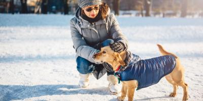 How to Choose a Winter Coat for Your Dog, Penfield, New York