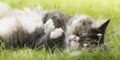 What You Should Know About Senior Pet Care, Perry, Georgia