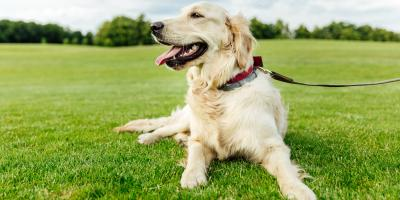 3 Pet Care Tips for Older Dogs, Perry, Georgia