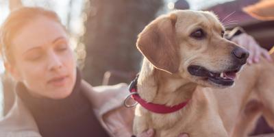 4 Creative Memorial Ideas for Your Pet, Perry, New York