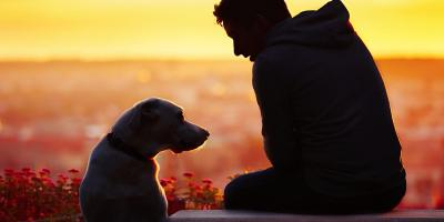 3 Ways to Honor a Pet That Has Passed Away, Perry, New York