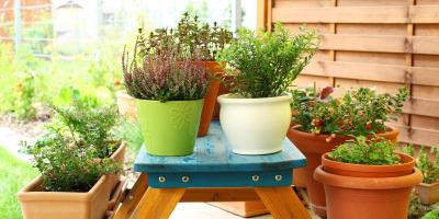 3 Tips for Creating a Garden in a Small Space, Honolulu, Hawaii