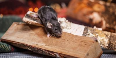 What Damages Can Mice Cause to Your Home?, 2, Maryland