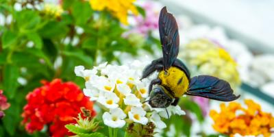 Pest Control Company Shares How to Identify Bee Types, Brookhaven, New York