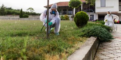 How to Avoid & Treat Chinch Bug Lawn Damage, Jasmine Estates, Florida