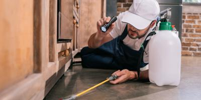 A Guide to Pest Control Inspection Schedules, Lihue, Hawaii