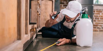 3 Signs You Need a Pest Control Inspection, Ogden, New York