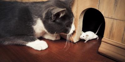 Pest Removal Experts Share 4 Signs You Need an Inspection, McGehee, Arkansas