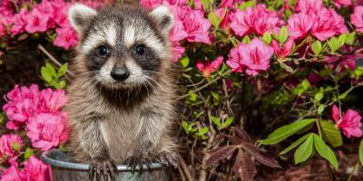 5 Natural Techniques for Keeping Nuisance Animals Away, Columbus, North Carolina