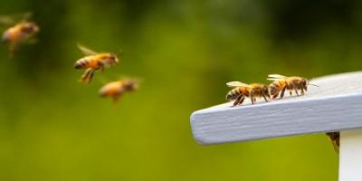 3 Things You Should Never Do During Bee Removal, Kernersville, North Carolina