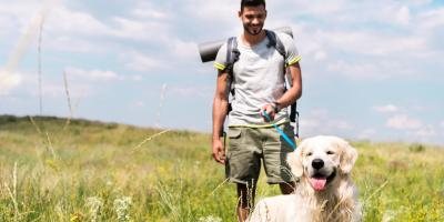 How Summer Allergies Might Affect Your Pet, Sharonville, Ohio