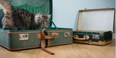 5 Ways to Make Your Pet's Boarding Experience a Success, Foley, Alabama