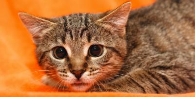 Pet Boarding Experts Share How to Get Your Cat More Comfortable Around Strangers, Keaau, Hawaii