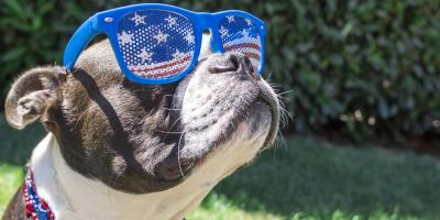The Do's & Don'ts of Keeping Your Pet Safe This 4th of July, Keaau, Hawaii