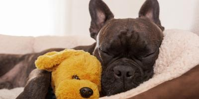 3 Tips for Creating a Comfortable Pet Boarding Experience, Lincoln, Nebraska
