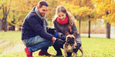 3 New Year's Resolutions for Pet Parents, Royse City, Texas