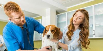 Benefits of Pet Insurance for Your Animal, San Marcos, Texas