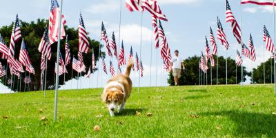 Pet Care Do's & Don'ts for the Fourth of July, Covington, Kentucky