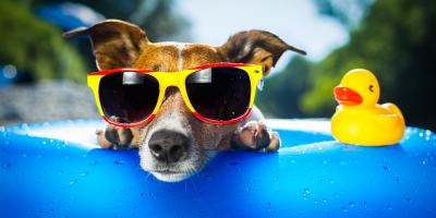 3 Pet Care Tips to Keep Your Dog Safe in The Summer Sun, Covington, Kentucky