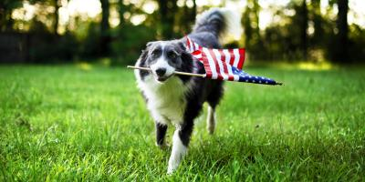 The Do's & Don'ts of Fourth of July Pet Safety, Wisconsin Dells, Wisconsin