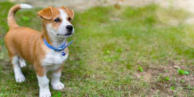 5 Tips for Housetraining a New Puppy , Fairfield, Ohio