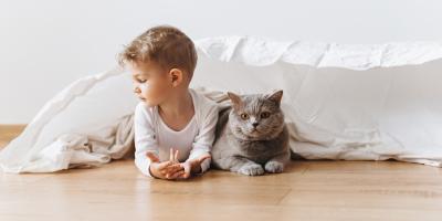 5 Pet Care Tips for Senior Cats , Cincinnati, Ohio