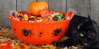 3 Halloween Safety Tips for Cats & Dogs, Honolulu, Hawaii
