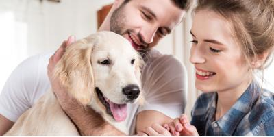 3 Reasons to Consider Pet Sedation for Your New Year's Party, Ewa, Hawaii