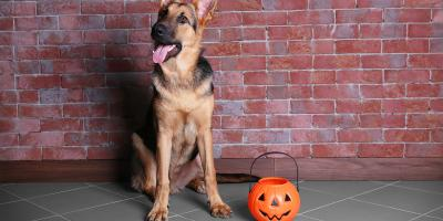 5 Tips to Keep Your Pet Safe on Halloween, Ewa, Hawaii