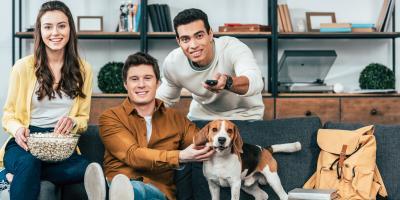 Understanding Dogs & TV, Nicholasville, Kentucky