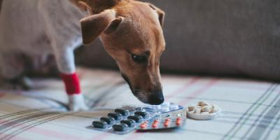 Pet Care Tips: 5 Ways You Can Get Pets to Take Their Meds, Perry, Georgia