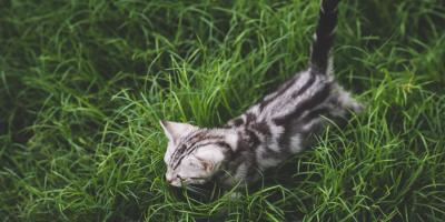 Why You Should Make Flea & Tick Prevention a Priority This Summer, Perry, Georgia