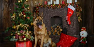 Important Pet Care Safety Tips for the Holidays, Perry, Georgia