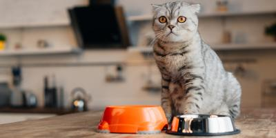 A Guide to Choosing the Right Cat Food, Russellville, Arkansas