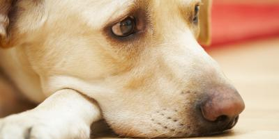 What Is Oxidative Stress in Dogs?, Apple Valley, Minnesota