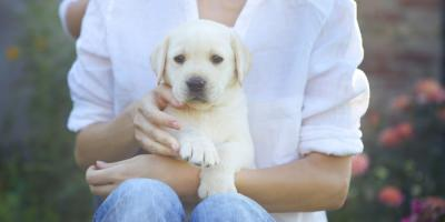 New Puppy Parent? Follow These Pet Care Do's & Don'ts, Apple Valley, Minnesota
