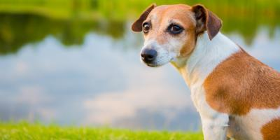 Is Heartworm Disease Becoming a Bigger Problem in the Lexington Area?, Versailles, Kentucky