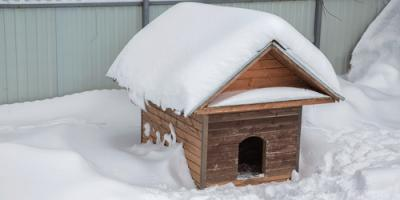 Pet Clinic Shares Outdoor Safety Tips to Protect Dogs in the Cold , Garrettsville, Ohio