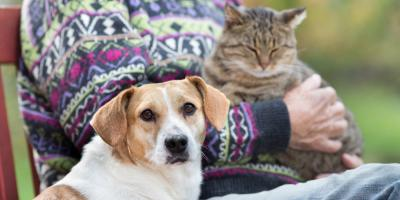 Pet Cremation Provider Shares 3 Tips for Aging Animal Care, Springfield, Ohio