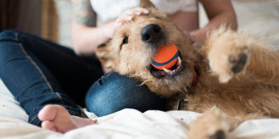 What Dog Owners Should Know About Canine Oral Health, Fairfield, Ohio