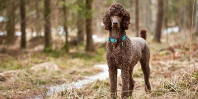 Which Dog Breeds Are Prone to Skin Conditions?, Sharonville, Ohio