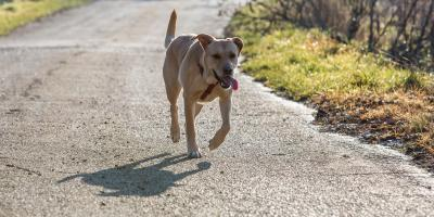 5 Steps to Take If Your Pet Is Missing , Covington, Kentucky