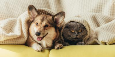 How to Keep Pets Safe This Winter, Prairie du Chien, Wisconsin