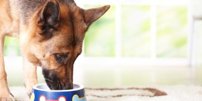 Everything You Need to Know About Buying Pet Food, Foristell, Missouri