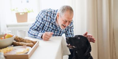 Should My Older Dog Eat Special Pet Food?, Manhattan, New York