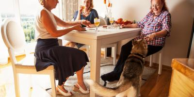 3 Tips to Make Your Apartment Pet Friendly, Lexington-Fayette Central, Kentucky