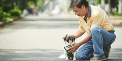 3 Ways Pets Improve Seniors' Lives, Honolulu, Hawaii