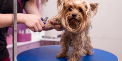 3 Pet Grooming Tips for Your Dog, Nicholasville, Kentucky